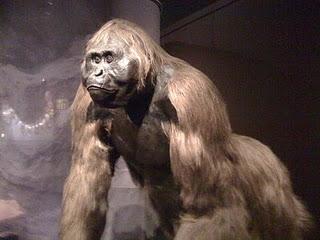 Gigantopithecus_