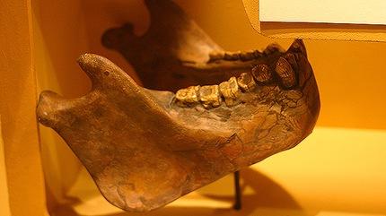 Gigantopithecus_dientes-