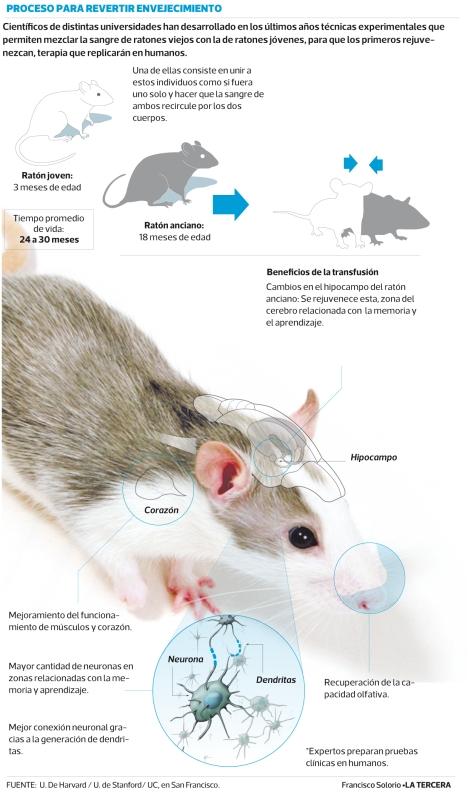 ratones-rejuvenecimiento