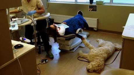 perro-dentista-