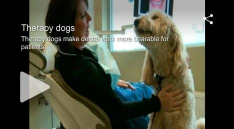 perro-dentista