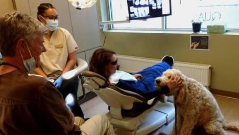 perro-dentista_